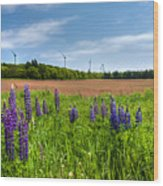 Lupins In A Field Wood Print by Matt Dobson