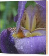Luscious Blooming Iris Wood Print