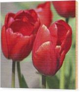 Luscious Tulips  Wood Print