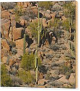 Lush Arizona Desert Landscape Wood Print