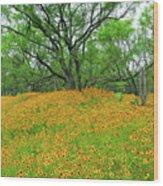 Lush Coreopsis Wood Print