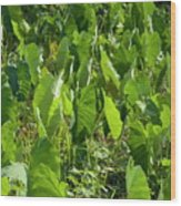 Lush Crop Leaves In A Field Wood Print