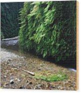 Lush Fern Canyon Wood Print