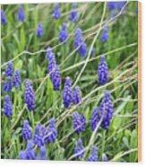 Lush Grape Hyacinth Wood Print