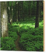 Lush Green At 2 Wood Print