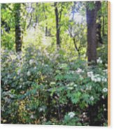 Lush Greens Wood Print