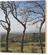 Lush Land Leafless Trees Iv Wood Print