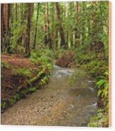 Lush Redwood Forest Wood Print