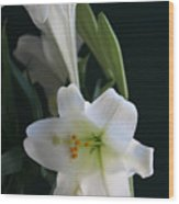 Lustrous Lilies Wood Print