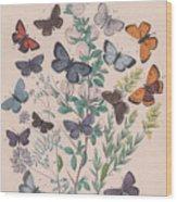 Lycaenidae Wood Print