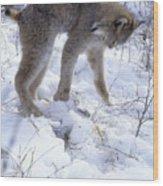 Lynx Captures Hare Wood Print