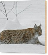 Lynx Hunting In The Snow Wood Print