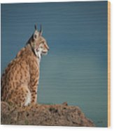 Lynx In Profile On Rock Looking Up Wood Print