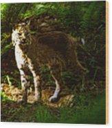 Lynx Rufus Wood Print