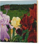 M S  O S Irises 2  Wood Print