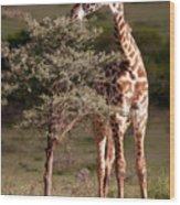 Maasai Giraffe - Giraffe Maasai Wood Print