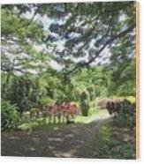 Macadamia Road Wood Print