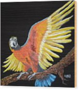 Macaw - Wingin' It Wood Print