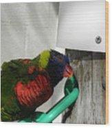 Macaw-1 Wood Print