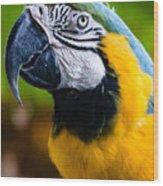 Duke Macaw Wood Print