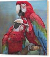 Macaw Love Wood Print