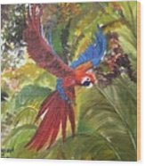 Macaw Parrot 3 Wood Print