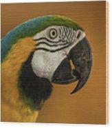 Macaw Portrait Wood Print
