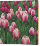 Mackinac Island Tulips 10681 Wood Print