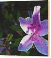 Maclay Garden In Morning Bloom Wood Print