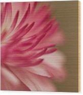 Macro - Pink Flower Wood Print