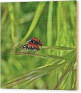 Macro Acrobats Wood Print