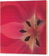 Macro Beauty Tulip Wood Print