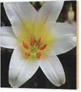 Macro Close Up Of White Lily Flower In Full Blossom Wood Print