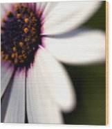 Macro Daisy One Wood Print