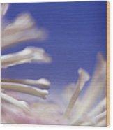 Macro Flower 2 Wood Print