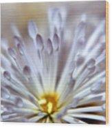 Macro Flower 3 Wood Print