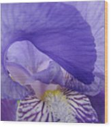 Macro Irises Close Up Purple Iris Flowers Giclee Art Prints Baslee Troutman Wood Print