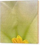 Macro Easter Lily Wood Print