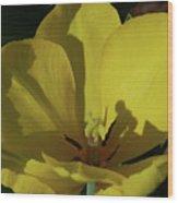 Macro Of A Flowering Yellow Tulip Up Close Wood Print