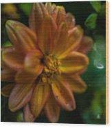 Macro Of Dahlia Flower Wood Print