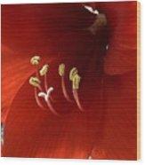 Macro Of Red Amaryllis Flower Wood Print