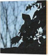 Macro On Leaves Wood Print