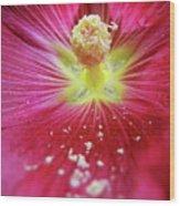 Macro Pink Purple Hollyhock Wood Print