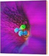 Macro Purple Flower Wood Print