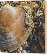 Macro Shell Wood Print