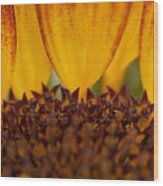 Macro Sunflower Wood Print