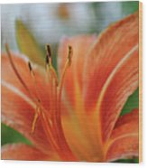 Macros Day Lily Wood Print