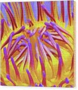 Macro's Lotus Wood Print