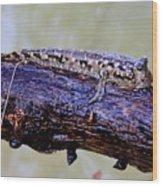 Madagascar Mudskipper Wood Print
