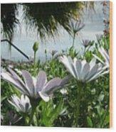 Madeira Daisies Wood Print